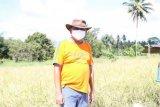 Gubernur Sulut ajak masyarakat ke kebun menanam antisipasi dampak COVID-19