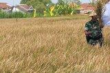 DPP: Cadangan beras Yogyakarta 16,7 ton untuk kebutuhan darurat