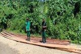 BKSDA Sulawesi Tenggara temukan puluhan batang kayu hasil pembalakan liar