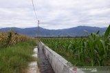 Pemkab Sigi  bantu pulihkan petani Gumbasa kembali olah lahan pertanian