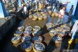 Penundaan pembayaran retribusi di pelabuhan perikanan Kalteng