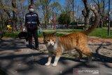 Dua kucing jadi peliharaan yang pertama terpapar COVID-19