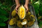 Petani Durian Oren