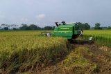 Pemkab Purbalingga perkirakan surplus beras bisa capai 1.400 ton