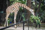 Taman Margasatwa Ragunan Jakarta Selatan mulai dibuka lagi untuk umum Sabtu