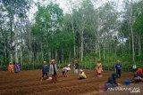 Dataran tinggi Tapanuli Selatan potensial pengembangan komoditas bawang merah