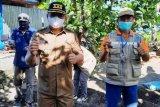 P2KBP3A Kabupaten Pasangkayu galakkan fungsi pembinaan lingkungan cegah COVID-19