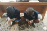 Polisi ringkus dua tersangka pengedar bahan peledak bom ikan di Lampung