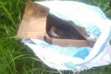 Jasad bayi dibuang dalam kardus berbungkus karung,  polisi lakukan indentifikasi