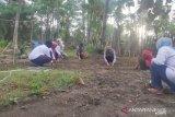 Ibu-ibu di Panau, bergerak manfaatkan pekarangan di Hari Bumi