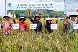 Hasil produksi Okmar di Seruyan capai 5.000 ton lebih