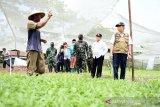 Riau waspadai gangguan pasokan pangan saat wabah dan jelang Lebaran