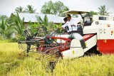 Bupati Askolani bersyukur, di tengah pandemi daerahnya masih surplus beras