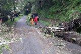 Tanah longsor dan pohon tumbang terjadi di sejumlah lokasi di Agam akibat curah hujan tinggi