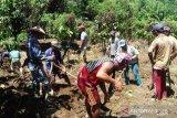 Farm work continues in Central Sulawesi  despite COVID-19 pandemic