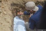 Kelompok Ali Kalora diduga bunuh empat orang di Sigi