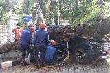 Mobil minibus plat merah penyok tertimpa pohon sawit