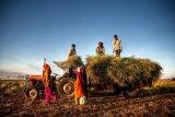 FAO imbau masyarakat beli produksi pangan setempat