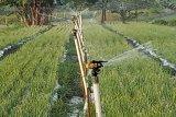 Petani Kulon Progo terapkan irigasi