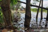 Ribuan hektare pohon  karet di Barito Utara terendam banjir