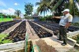 BPTP Kalteng siap bagikan tanaman hortikultura bagi 1.000 KK di Palangka Raya