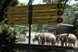 Yogyakarta mengalihkan uji coba pembukaan destinasi wisata ke GL Zoo