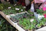 Kampung Sayur Yogyakarta dukung pemenuhan kebutuhan pangan saat pandemi COVID-19