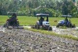 Petani di daerah ini targetkan panen padi tiga kali dalam setahun
