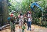 Cara unik Royal Safari Garden, wisata kebun binatang melalui siaran langsung instagram dan YouTube