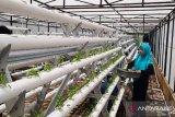 Polbangtan Medan menembangkan hidroponik modern