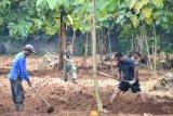 Lantamal VI siapkan lahan untuk pembibitan sayur mayur dukung pemerintah