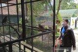 Semua jenis satwa di Taman Cikembulan dalam kondisi sehat