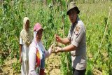Program 'Roti Keju' Polres Kotim dukung penguatan ketahanan pangan