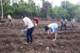 Dinas Pangan dan Pertanian Sitaro Ajak Masyarakat Gemar Menanam
