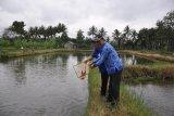 DP3 Sleman manfaatkan jejaring media sosial atasi kesulitan pemasaran ikan