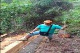 Polres Pekalongan tangguhkan penahanan  terhadap pencuri kayu