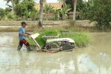 Petani Ogan Komering Ilir percepat musim tanam jaga ketahanan pangan nasional