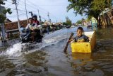 Banjir Rob Pesisir Pekalongan Utara