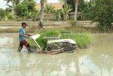 Kabupaten OKI serap beras petani penuhi kebutuhan bansos COVID-19