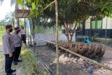 Bantu ekonomi warga, Polres Siak berikan bibit tanaman dan bebek petelur