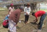 WVI beri pendampingan petani tanam sayur organik di Touna