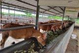 Mentan minta perbanyak standarisasi benih dan bibit ternak untuk daya saing