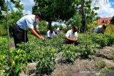 Antisipasi berbagai kendala pertanian di Kalteng