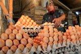 Telur ayam di Kupang kembali normal akibat permintaan kurang