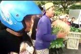 Viral, pedagang sayur di Malang buang dagangan ke sungai
