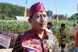 Dinas Pertanian Kotim dorong kebangkitan petani milenial
