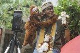 Pendongeng menggunakan boneka hewan sebagai media mendongeng secara daring di Kelapa Dua, Depok, Jawa Barat, Selasa (5/5/2020). Komunitas Dongeng Lagi Dong menghibur serta mengedukasi anak-anak melalui media sosial sebagai upaya memberikan semangat agar tetap di rumah saja guna antisipasi penyebaran virus corona (COVID-19). ANTARA FOTO/Asprilla Dwi Adha/foc.