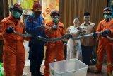 Ular sanca sepanjang 3,5 meter dievakuasi dari dapur rumah makan Padang