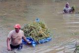 Panen Padi Saat Banjir di Aceh Utara