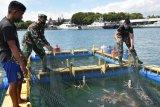 Lantamal VI budi daya lobster dan ikan laut dukung ketahanan pangan